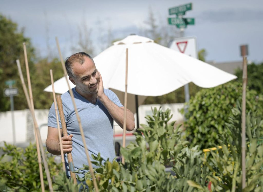Laguna Beach resident Ramin Pejan, 39, looks over his garden plot as he considers how best to improve the soil of the his next crop. ///PHOTO BY DAVID BRO, CONTRIBUTING PHOTOGRAPHER.