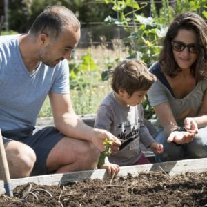 Gardening with Beneficial Insects