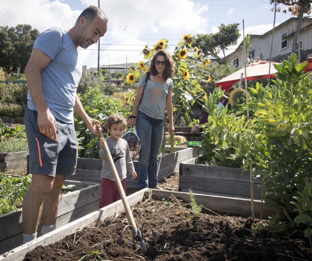 Laguna Beach resident Ramin Pejan, 39, along with his son, Kaiaan (cq) , 2 1/2, and his wife Lili Zandpour, as they consider how best to improve the soil of their garden plot for their next crop. ///PHOTO BY DAVID BRO, CONTRIBUTING PHOTOGRAPHER.