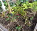 Ann's Fall Gardening Tips