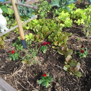 Ann's Fall Gardening Tips